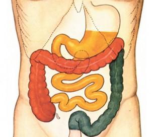 Poor Health Begins in the Gut