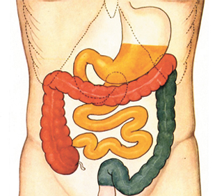 Poor Health Begins in the Gut
