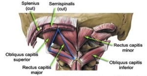 The Craniocervical Junction and headache disorders