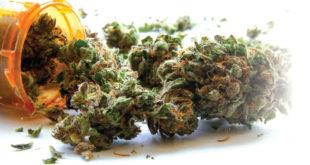 Medical Marijuana Goes Mainstream